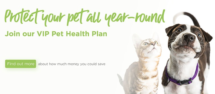 Cathcart & Winn Veterinary Clinic and Hospital in Farnham in Surrey