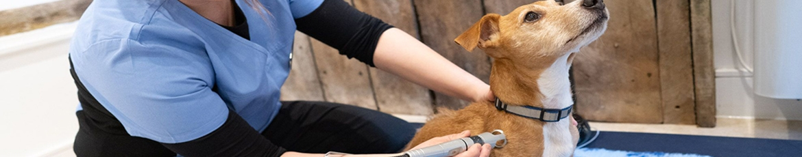 Laser Therapy for your dog | Laser therapy for your pet