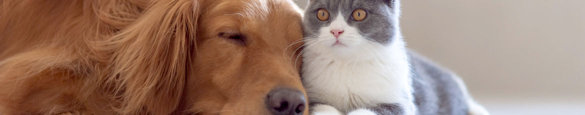 Neutering your cat, dog and rabbit